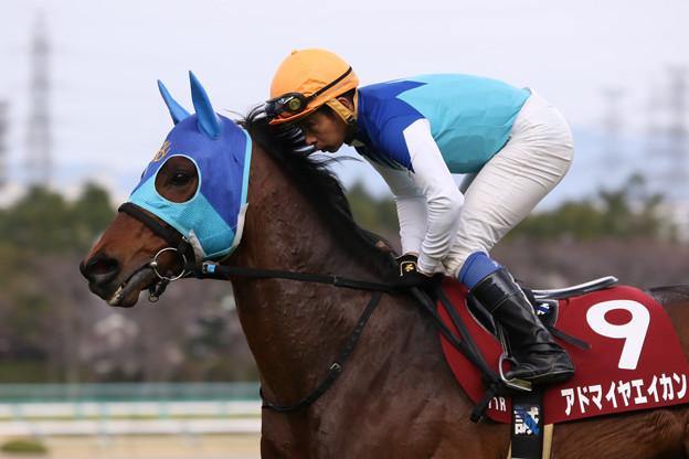 アドマイヤエイカン 返し馬(19/03/17・第67回 阪神大賞典)