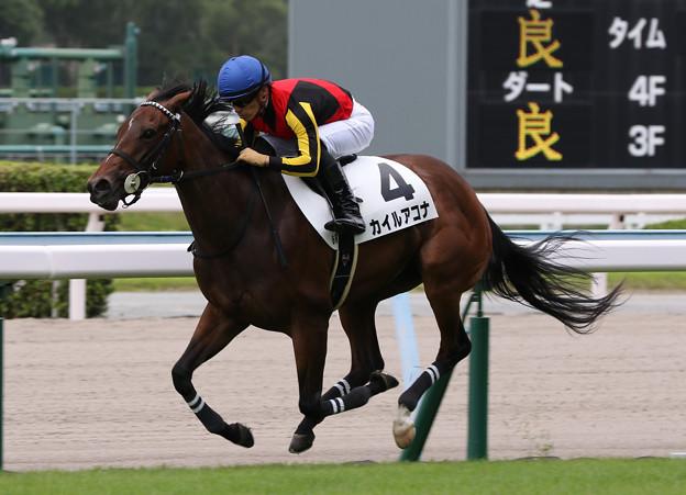 カイルアコナ レース(19/07/27・新馬戦)