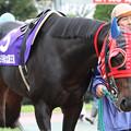 ジャングルスマイル パドック(11/11/13・第59回 北國王冠)