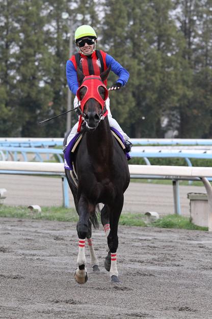 ジャングルスマイル レース後_2(11/11/13・第59回 北國王冠)