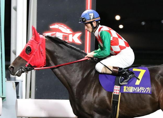 サブノジュニア 返し馬(19/10/16・東京スポーツ盃 第26回 マイルグランプリ)