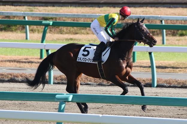 スギノグローアップ 返し馬(15/12/19・3R)