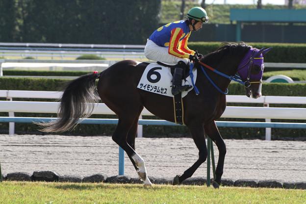 サイモンラムセス 返し馬(12/11/10・2R)