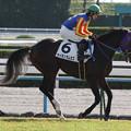 Photos: サイモンラムセス 返し馬(12/11/10・2R)