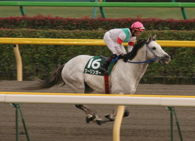 クーリンガー 返し馬(06/10/28・第11回 東京中日スポーツ杯武蔵野ステークス)