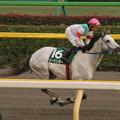 Photos: クーリンガー 返し馬(06/10/28・第11回 東京中日スポーツ杯武蔵野ステークス)