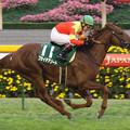 Photos: フサイチアソート レース(07/11/17・第12回 東京スポーツ杯 2歳ステークス)