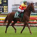 Photos: フサイチアソート 返し馬(07/11/17・第12回 東京スポーツ杯 2歳ステークス)