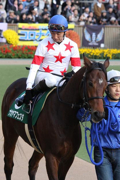 Photos: ナカヤマフェスタ パドック(08/11/22・第13回 東京スポーツ杯 2歳ステークス)