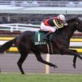コディーノ レース(12/11/17・第17回 東京スポーツ杯 2歳ステークス)
