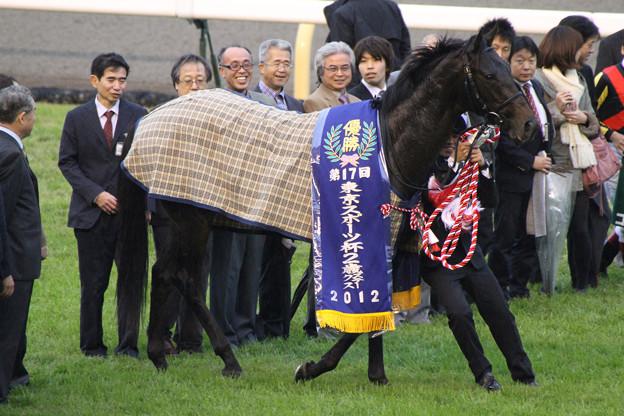 第17回 東京スポーツ杯 2歳ステークス 口取り(12/11/17)