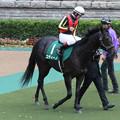 Photos: コディーノ パドック(12/11/17・第17回 東京スポーツ杯 2歳ステークス)