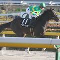 Photos: オールウェイズゼア 返し馬(20/02/23・大島特別)