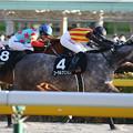 Photos: コーラルプリンセス レース(20/02/23・大島特別)