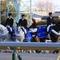東京競馬場 誘導馬(20/02/23・第37回 フェブラリーステークス)