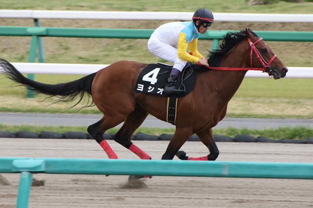 ヨシオ 返し馬(18/04/14・下総ステークス)