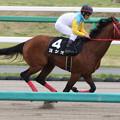 Photos: ヨシオ 返し馬(18/04/14・下総ステークス)