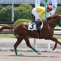 フォークローバー 返し馬(17/05/03・びわ特別)