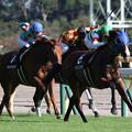 Photos: バリングラ レース_1(19/10/05・本栖湖特別)