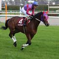 マキハタサイボーグ 返し馬(07/12/01・第41回 スポーツニッポン賞 ステイヤーズステークス)