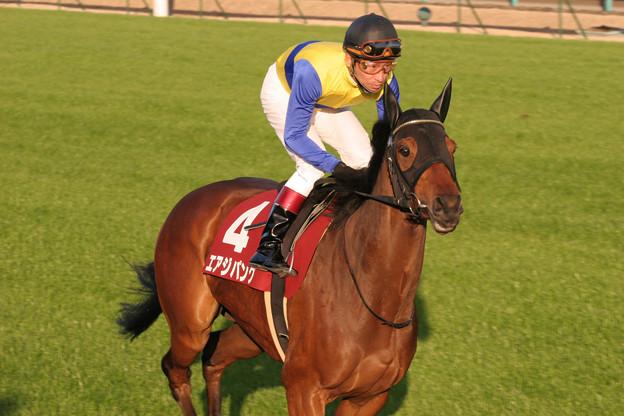 エアジパング 返し馬(08/12/06・第42回 スポーツニッポン賞 ステイヤーズステークス)
