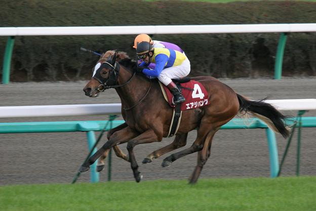 エアジパング レース(08/12/06・第42回 スポーツニッポン賞 ステイヤーズステークス)