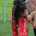 Photos: エアジパング_1(08/12/06・第42回 スポーツニッポン賞 ステイヤーズステークス)