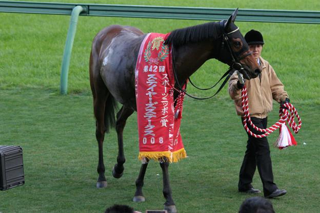 エアジパング_2(08/12/06・第42回 スポーツニッポン賞 ステイヤーズステークス)