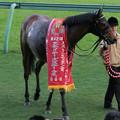 Photos: エアジパング_2(08/12/06・第42回 スポーツニッポン賞 ステイヤーズステークス)