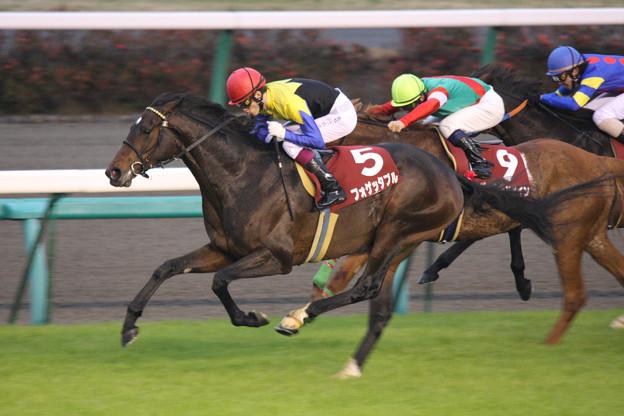 フォゲッタブル レース(09/12/05・第43回 スポーツニッポン賞 ステイヤーズステークス)