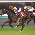 Photos: フォゲッタブル レース(09/12/05・第43回 スポーツニッポン賞 ステイヤーズステークス)