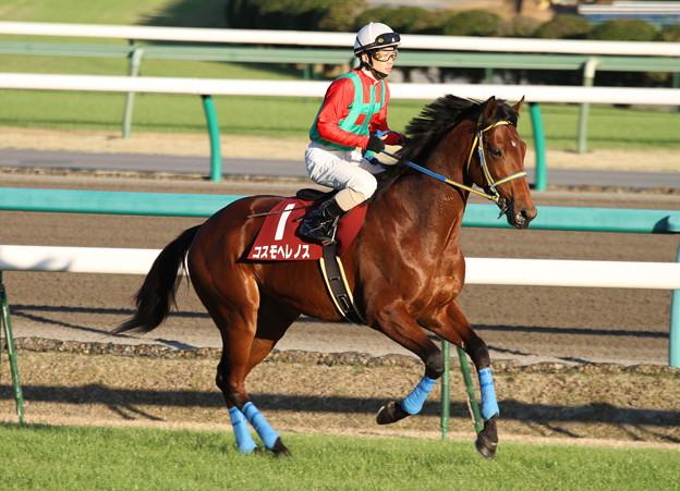 コスモヘレノス 返し馬(10/12/04・第44回 スポーツニッポン賞ステイヤーズステークス)