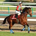 Photos: コスモヘレノス 返し馬(10/12/04・第44回 スポーツニッポン賞ステイヤーズステークス)