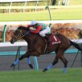 Photos: コスモヘレノス レース(10/12/04・第44回 スポーツニッポン賞ステイヤーズステークス)
