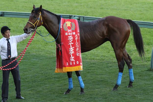 コスモヘレノス(10/12/04・第44回 スポーツニッポン賞ステイヤーズステークス)