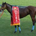 Photos: コスモヘレノス(10/12/04・第44回 スポーツニッポン賞ステイヤーズステークス)