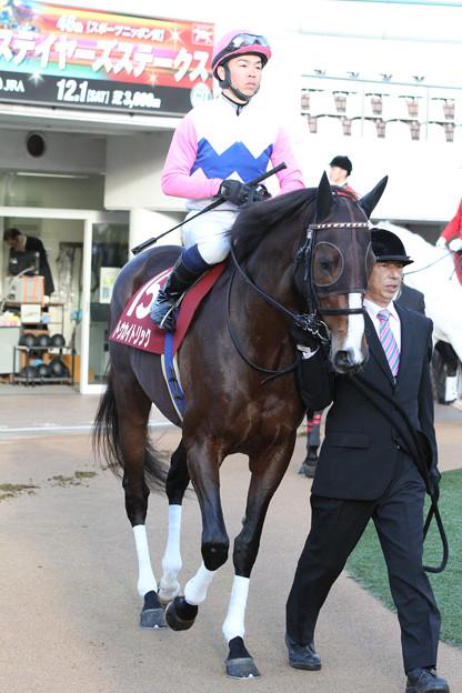トウカイトリック パドック_2(12/12/01・第46回 スポーツニッポン賞 ステイヤーズステークス)