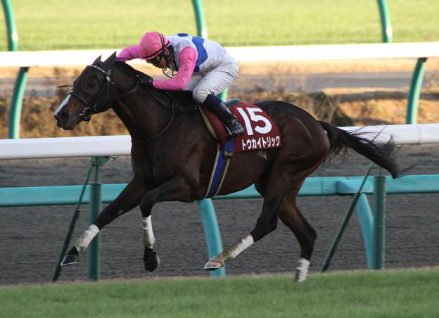トウカイトリック レース(12/12/01・第46回 スポーツニッポン賞 ステイヤーズステークス)