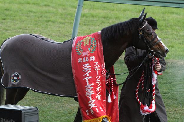 トウカイトリック_2(12/12/01・第46回 スポーツニッポン賞 ステイヤーズステークス)