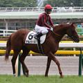 Photos: アルバート 馬場入場(13/06/23・新馬戦)