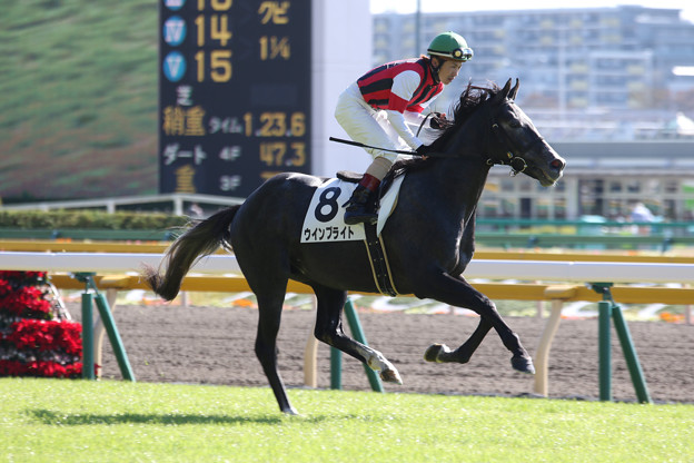 ウインブライト 返し馬(16/11/12・4R)