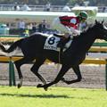 ウインブライト レース(16/11/12・4R)