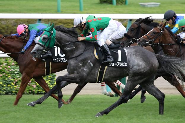 ジョーアラビカ レース(19/09/07・木更津特別)
