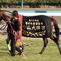Photos: マジェスティバイオ_3(11/12/24・第134回 中山大障害)