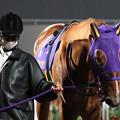 Photos: カジノフォンテン パドック(20/12/09・第12回 勝島王冠)