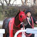 Photos: エイシンエンジョイ_1(20/12/03・第16回 笠松グランプリ)