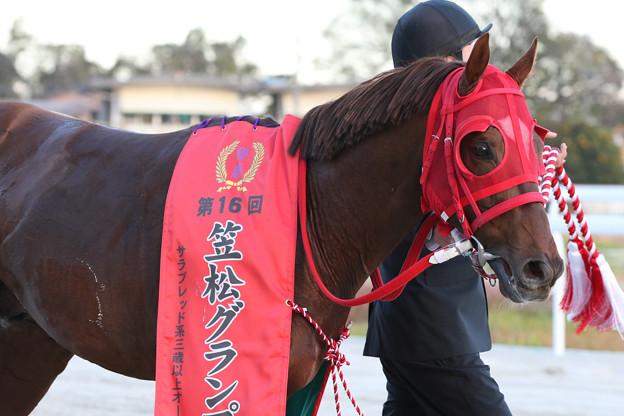 エイシンエンジョイ_2(20/12/03・第16回 笠松グランプリ)