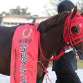 Photos: エイシンエンジョイ_2(20/12/03・第16回 笠松グランプリ)
