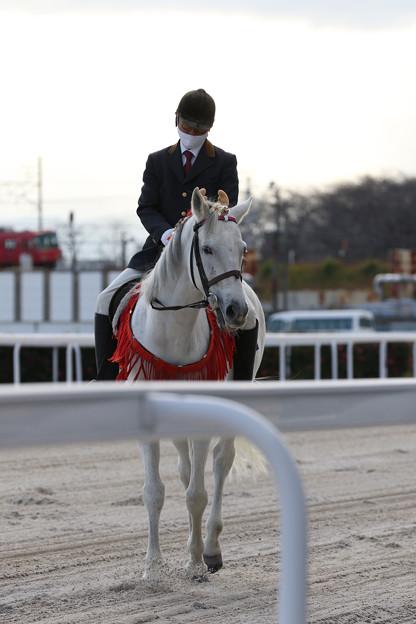 誘導馬 エクスペルテ_4(20/12/03)