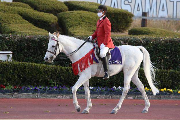 誘導馬 エクスペルテ_6(20/12/03・第16回 笠松グランプリ)
